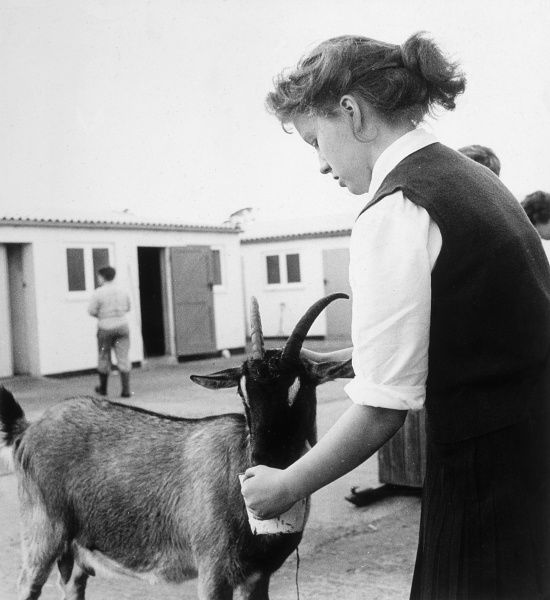 A girl feeds a goat. Date: 1950s