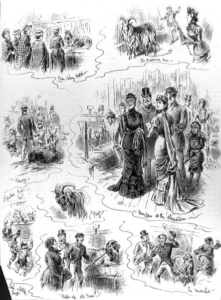 Engraving showing a series of scenes from the Goat Show at the Alexandra Palace, London, 1880