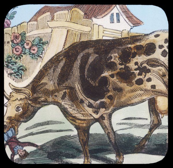 Tomb Thumb - hero of a 16th century nursery tale - encounters a cow, whose lunch he almost becomes