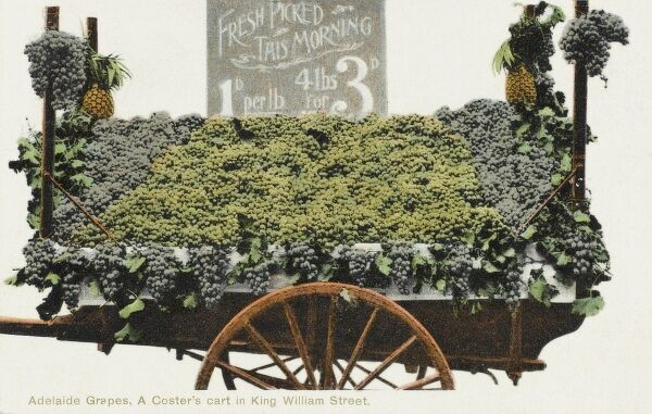 A superb photographic card depicting a grape barrow in Adelaide (King William Street), Australia. The sign shows the advantage of buying 4 pounds of freshly-picked grapes which (at 3 pence) is cheaper than 1 pound for 1 penny!
