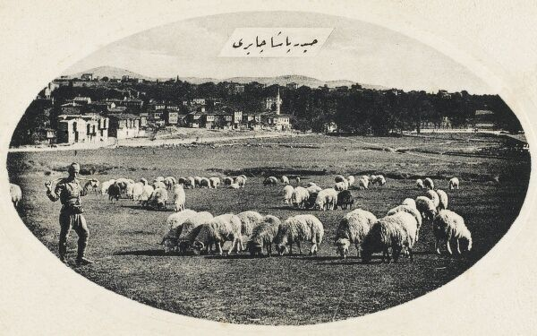 Sheep graze Haidar Pacha, Constantinople. On Asian side of the Bosphorus in the Uskudar District