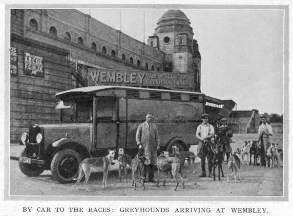 Greyhound arriving at Wembley after being transported in a Commer Centaur, with a well sprung chassis for added comfort