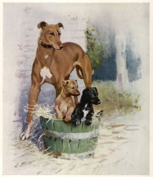 Painting by the well-known horse and animal artist, Gilbert Holiday of a greyhound bitch and her two puppies