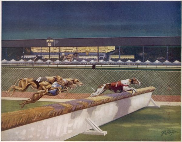 An artist's impression of a night scene in a stadium when greyhound racing is in progress over the hurdles