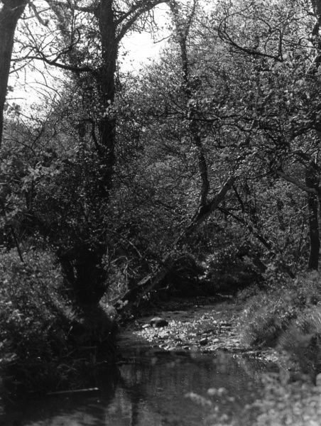 Groudle Glen, one of the beauty spots around Douglas, Isle of Man. Date: 1930s