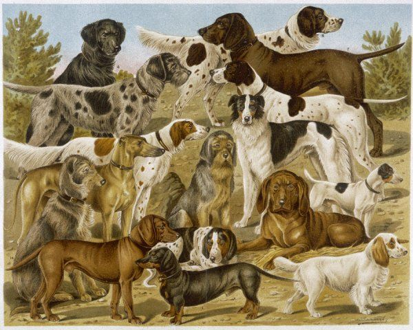 A large assortment of dogs: including:Hounds, Setters and Spaniels
