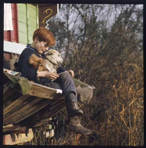 A ginger haired gypsy boy sits on the shelf at the end of the family caravan with his two dogs at an encampment in Surrey