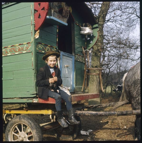 A gypsy boy sits by the door to his family caravan clutching onto a chicken at a Surrey encampment
