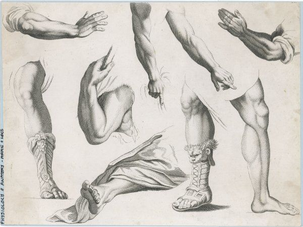 An assortment of hands and feet - some of the feet in sandels