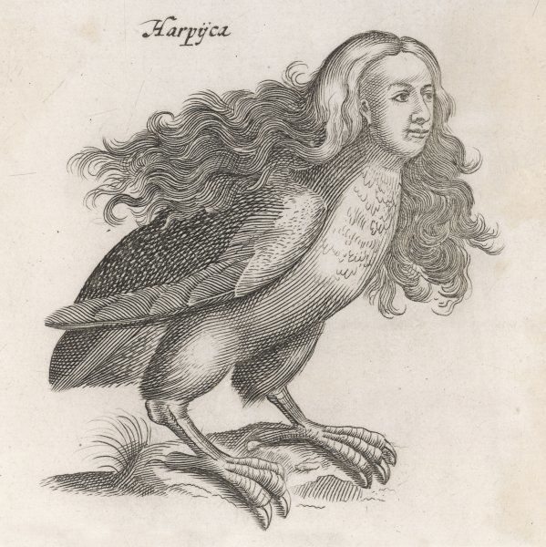 Though Johnstone includes the harpy in his natural history of birds, they are only half- birds, having human faces ; they have nasty habits and they smell awful