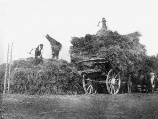 Harvest - Gathering the Hay