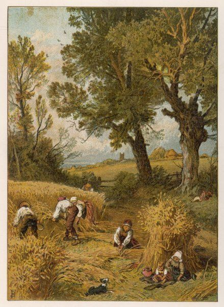 Harvesting with the sickle in an English corn-field, before the introduction of reaping machines