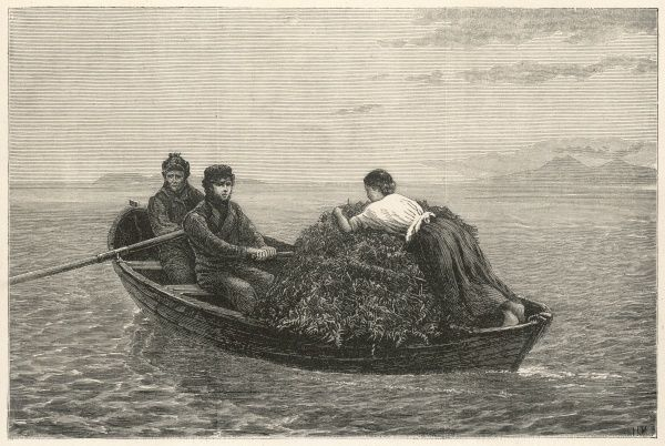 A boat is piled high with kelp and rowed ashore by two sullen-looking gentlemen