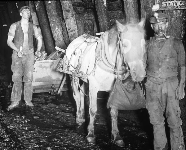 A haulier and his assistant, with a pit pony pulling a truck, at Baldwin's Clog and Legging Level, near Pontypool, South Wales