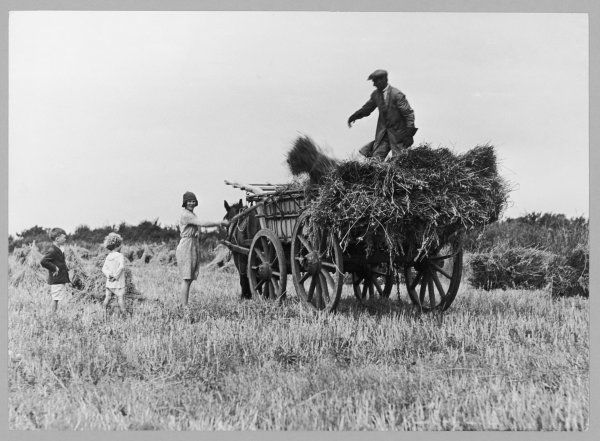 Three children helping their farmer father to bring in the hay by horse and cart