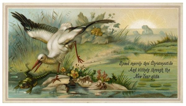 A heron makes a grab for a frog, evidently considered an appropriate subject for a Christmas card !