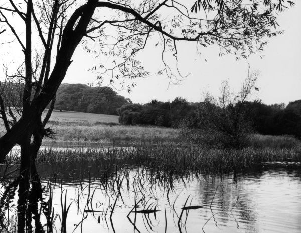 A tranquil scene by one of the many ponds at Highgate, north London. Date: 1950s