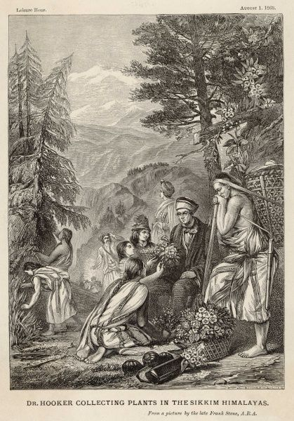 sir JOSEPH DALTON HOOKER naturalist, collecting plants in the Sikkim Himalayas