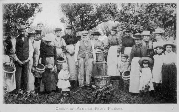 Men, women and children all participating in hop picking