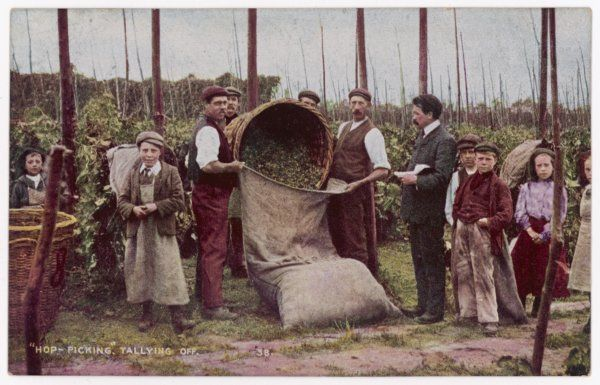 "Kent hop pickers ""tallying off&quot"