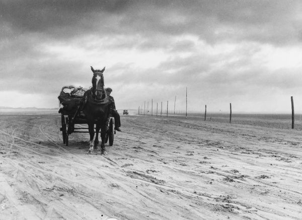 A horse and cart (and a car in the far distance) drive over the sands at Holy Island (Lindisfarne) at low tide, a three mile ride from the mainland, possible twice daily