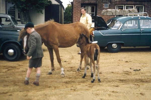 A horse and its foal in a pub car park in Ireland. A little boy is feeding the horse, while a man stands watching. (3 of 3)