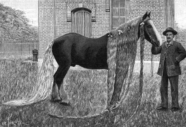 This horse with an exceptionally long mane and tail, hails from Conneticut, United States of America. Date: 1892