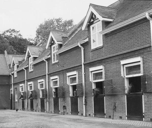Horses in their stables. Date: 1960s