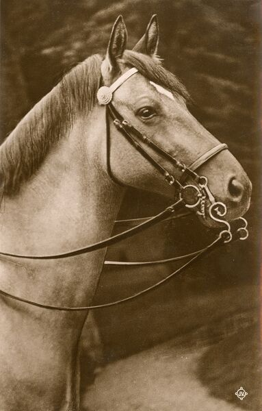 Horse wearing a Pelham Double Bridle Date: circa 1910s