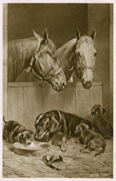 Two Horses peeking over the edge of their stable to see a Mother Dachshund and her brood of puppies Date: circa 1910s