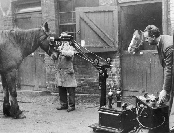 A horse being x-rayed at the Royal Veterinary College, Camden, London, using portable x-ray apparatus, which has proved invaluable in the treatment of animal ailments