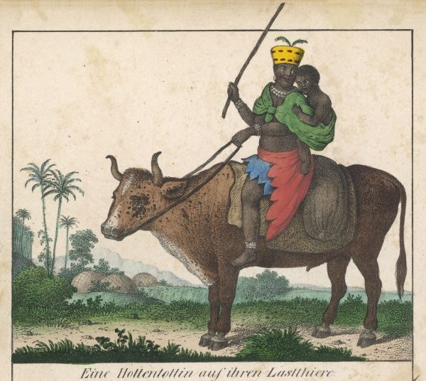 Hottentot riding his ox