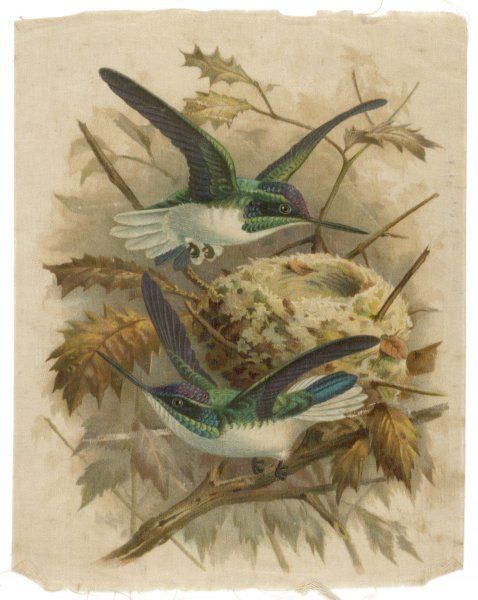 Decorative silk print showing two green birds (possibly Humming Birds) nest building
