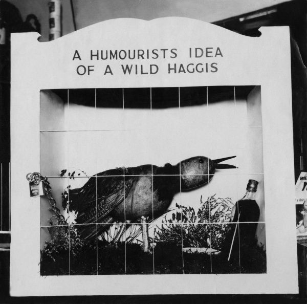 A 'wild' haggis in its cage - this one is guaranteed to be edible! Date: 1930s
