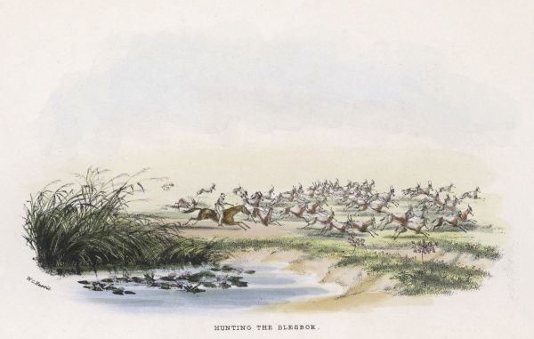 British sportsmen on the African veldt pursue the besbok (aka bontebok) (damatiscus albifrons)