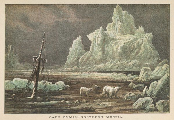 The icy coast at Cape Omman, Northern Siberia, where ships are wrecked but bears roam safely