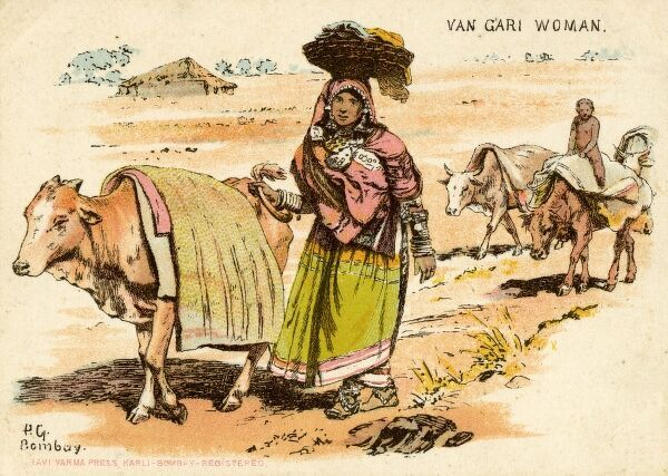 India - Van Gari Woman leading an Ox and carrying cloth in a basket on on her head