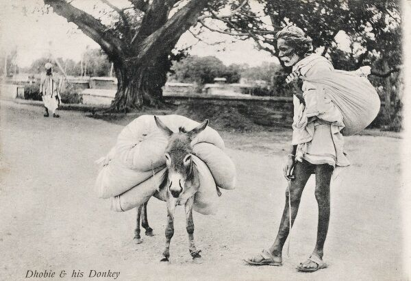 Indian Dhobie (washerman / laundryman) with his miniature donkey, bearing quite a load!