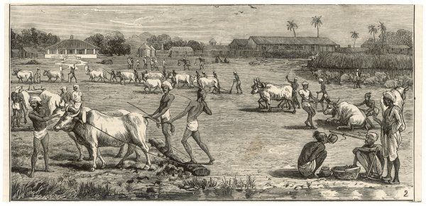 The cultivation of indigo in India. Ploughing in the factory zyraths