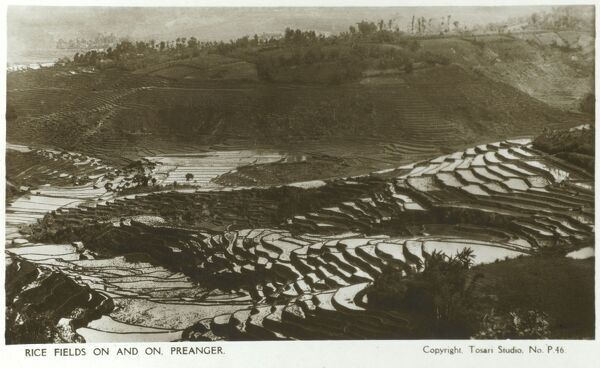 Rice Fields in Preanger (now Priangan), Western Java (now part of Indonesia). Date: circa 1920