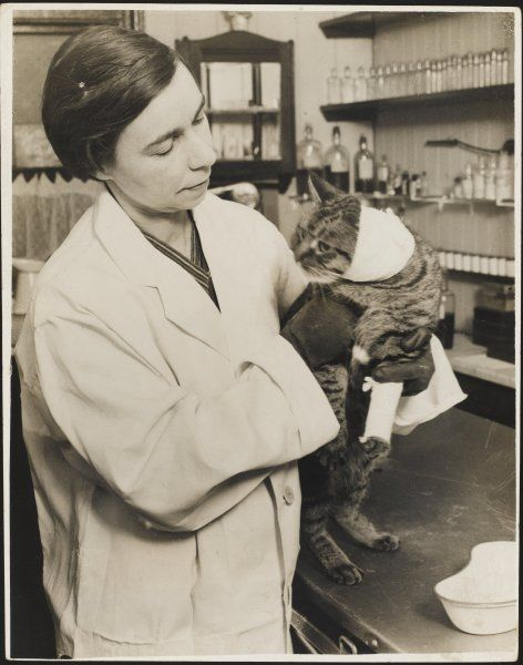 A veterinary surgeon holding a cat at the Cat's Hospital, Hampstead, London