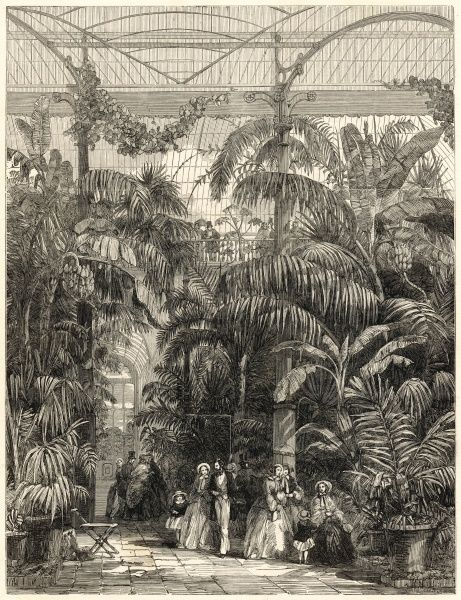 Engraving showing the centre of Great Palm House at the Royal Botanic Gardens, Kew, Surrey in 1852