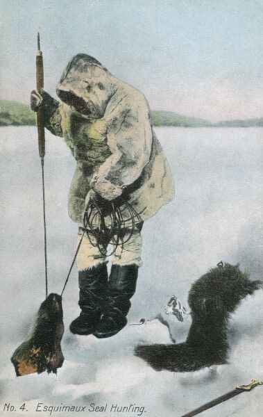 Patence Rewarded. An Inuit seal hunter pulls a caught seal out through the hole into which he was fishing with a combination of the baited rope and a thin spike or barbed spear