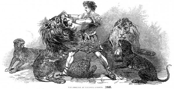 Engraving showing Isaac Van Amburgh (c.1800-1868), the Dutch-American animal trainer, performing with his lions and other big cats at a show in Vauxhall Gardens, London, 1848