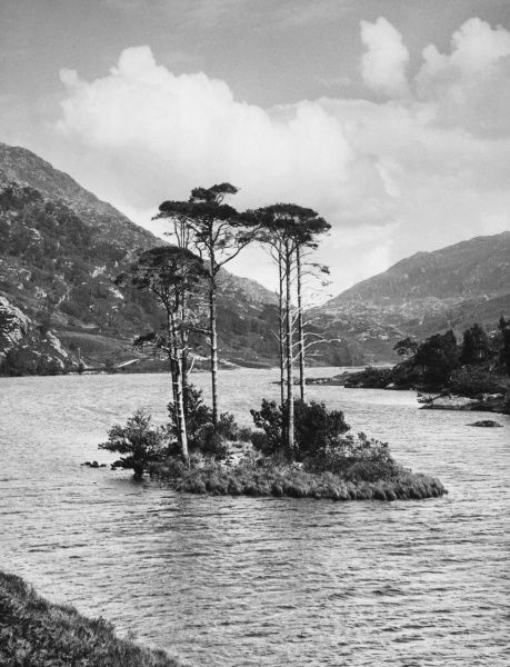 The perfect little island, beautifully canopied with trees, makes a charming scene of Loch Eilt, on the 'Road to the Isles' from Fort William to Malliag, Invernessshire