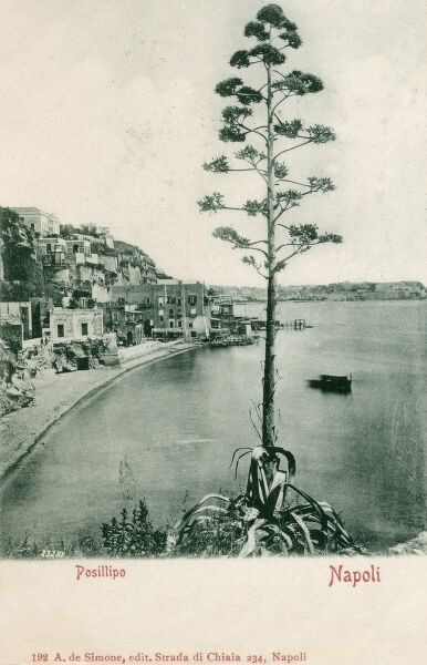 Italy - Naples - Posillipo area - A large plant (a yucca?)dominates the foreground
