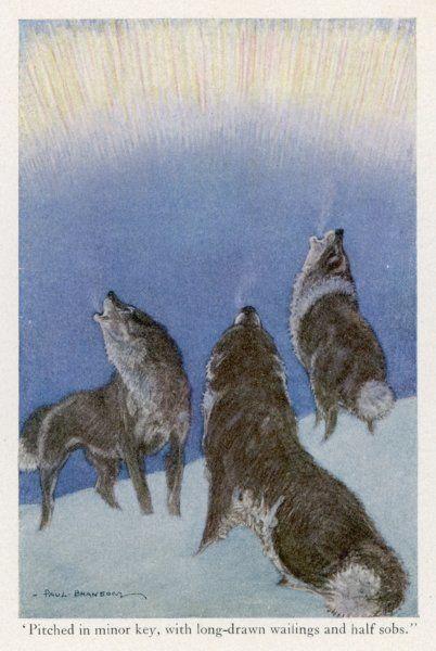 The song of the huskies: howling under the aurora borealis