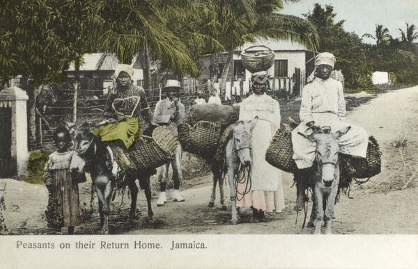 Jamaican villagers returning home from market on their donkeys Date: circa 1909