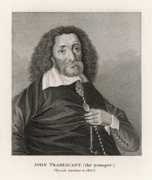 JOHN TRADESCANT (younger) Physick Gardener to Charles I