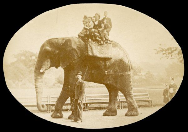 Jumbo is shown with a keeper (possibly Matthew Scott) and seven people who ride on his back